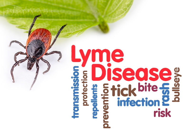Spring Brings Ticks, Ticks Bring Lyme Disease